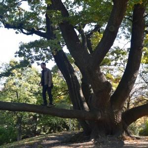 Ep32 Family Tree
